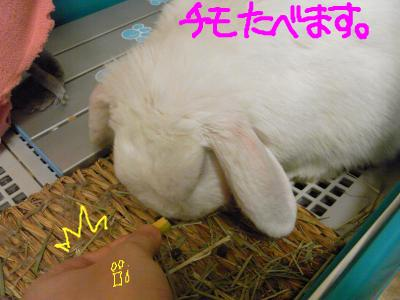 snap_hanatose_20096022331.jpg