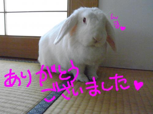 snap_hanatose_20096022432.jpg