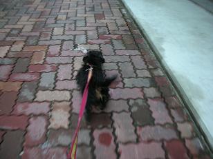冬の散歩 013