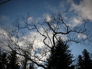 冬の散歩 089