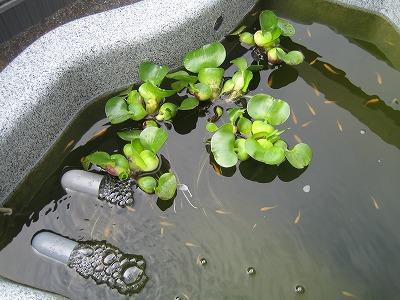.2009.4.14プルちゃん・ムック 027