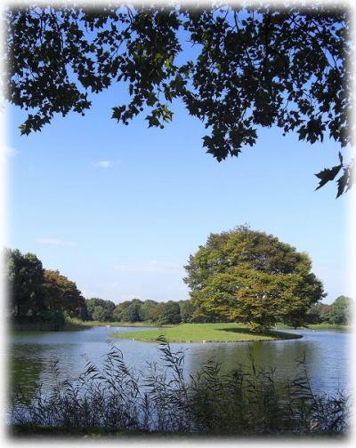 水鳥の池。