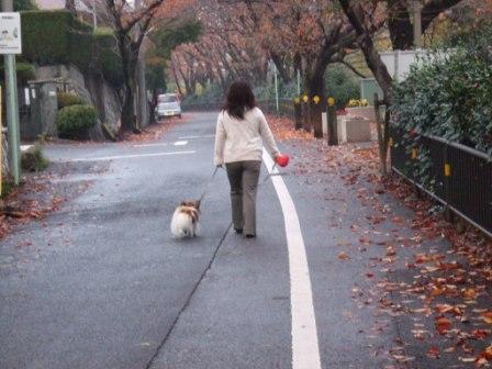 コピー ~ 散歩2