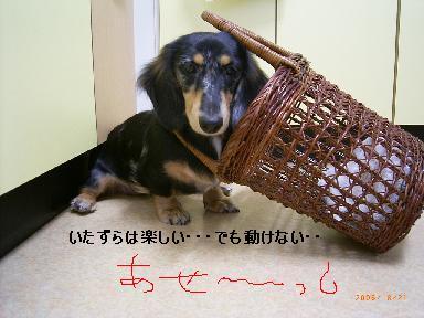 itazura_20080220003734.jpg