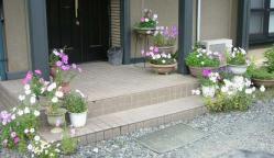 玄関の花~~♪