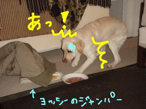 071208_201240.jpg
