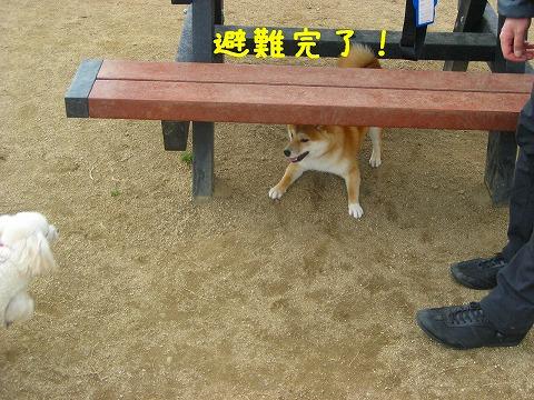 地震です。