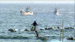 イルカ漁1