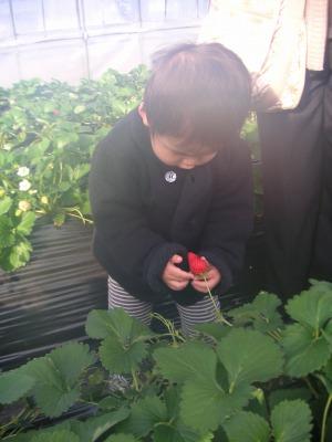 01017stberry2.jpg