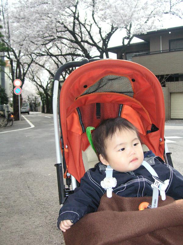 0330_sakura.jpg