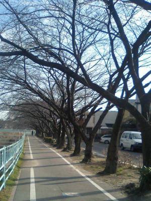 実家での散歩コース!