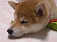 寝る♪リビング床