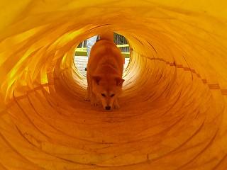 トンネル~