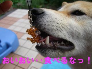 食べるなっ!