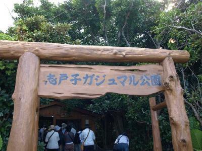 志戸子ガジュマル園