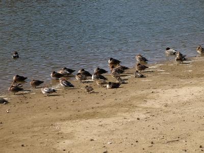 鳥さんがいっぱい