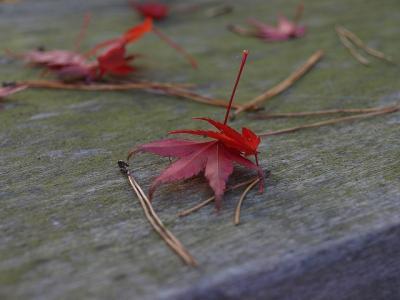 野鳥観察シェルターの落ち葉