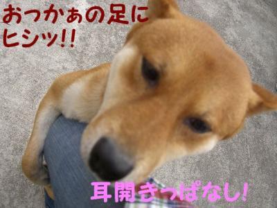 おっかぁ襲われる!!!!