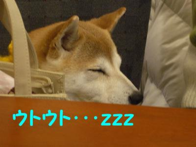 絵留ちゃん、寝てた?