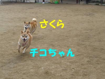 楽しく走る~~
