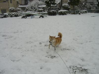 雪に興奮!