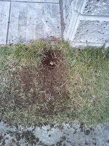 芝生を掘り掘り~♪