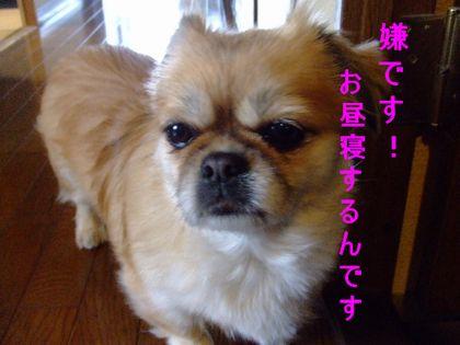 2008_02030096.jpg