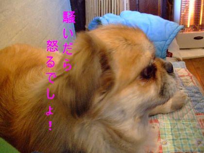 2008_02170107.jpg