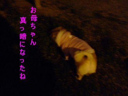 2008_02170121.jpg