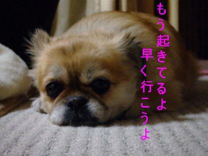 2008_02200175.jpg