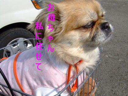 2008_02200186.jpg