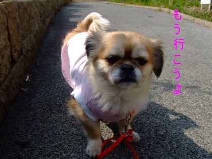 2008_02200188.jpg