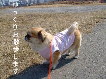 2008_02200205.jpg