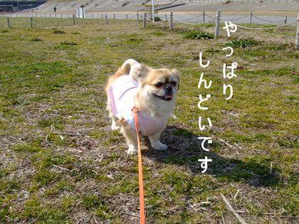 2008_02200211.jpg