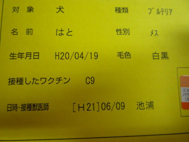 P1010830.jpg