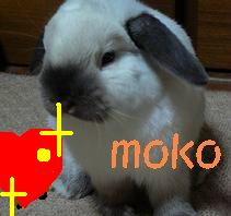 moko.jpg