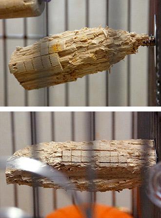 齧り木比較