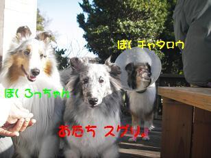 IMGP7021zxc.jpg
