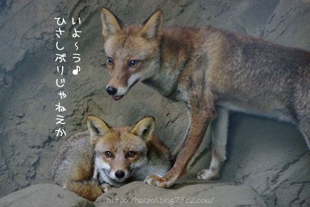 (・ω・)ノィョ―ゥ