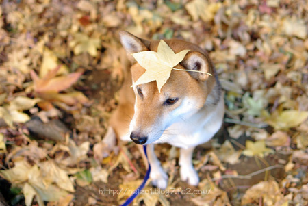 葉っぱ落としていい?
