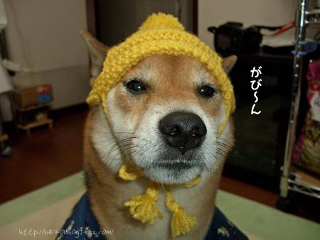 Σ(゚д゚lll)ガーン