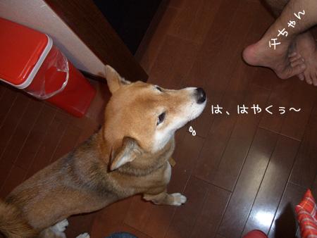 はやくくれ~(´ρ`)