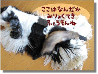 Image2_20090525190915.jpg