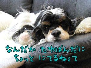 Img_3977a.jpg