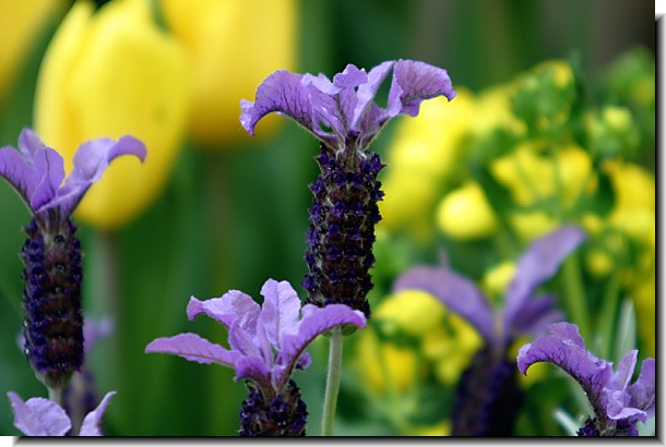 春日井植物園