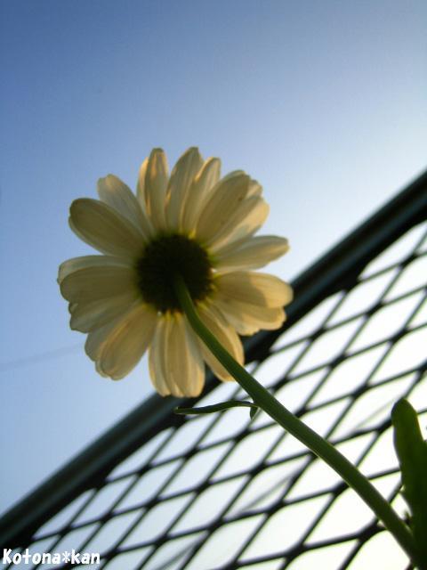 空を抱く花