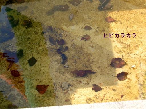 枯れ葉プール