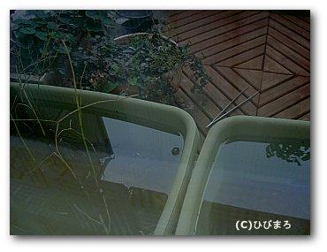 窓越しのビオ.jpg
