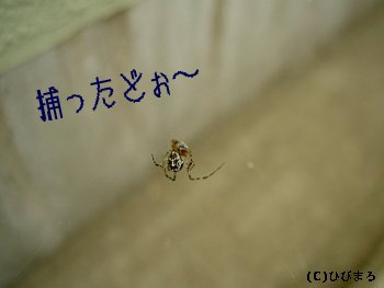蜘蛛ですが何か