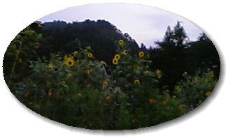 090819_183425_M.jpg